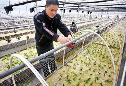 苗木培育数字化管理-行业资讯-中国园艺信息网-花卉